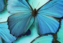 Beautiful Butterflies / And also moths and dragonflies, both of which are awesome.