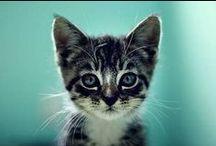 Meow... Miau....