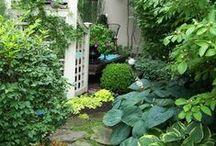 Garden // Grow / by Janet Bachelder