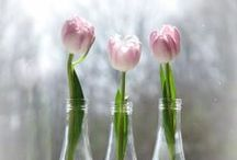 Seasonal Decor: Spring Styling (St Patrick's Day & Easter) / by Darcy Jacobs