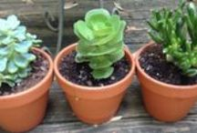 things to do in the garden NOW to get ready for spring!
