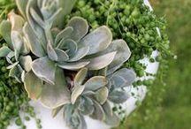 Succulents / by Janet Bachelder