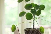 Houseplants / by Janet Bachelder