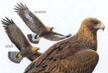 Eagles of St. John / by ewobnerak