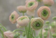 Garden / by Kerstin Beck
