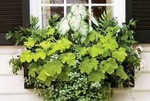 Containers & Window boxes / by Janet Bachelder