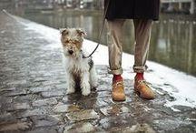 fashionable fella / by bonnie