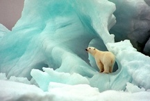 Look at this !! / Remarkable, beautiful, artful pictures / by Deborah Phelps