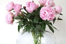 Adoreable Peonies & Other Flowers