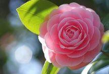 Garden & Floral Eye Candy