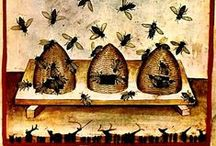 Bee hotels / by Angie Thompson