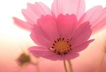 Lovely pink ★ Rosadito lindo / for pink lovers para amantes del rosa