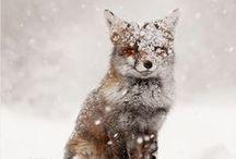 winter : m y  h e a r t