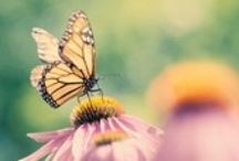 Butterflies ★ Mariposas