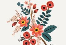 Illustrated / Illustrations. Drawn, linear and lovely.