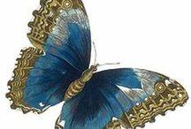 butterflies, animals printable