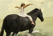 All Things Equine / Horses will touch your heart in such a way as to capture your love forever