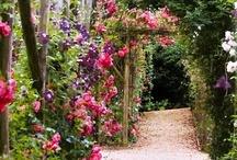 Garden / a place of wonder at Gods creation / by Doc Hansen