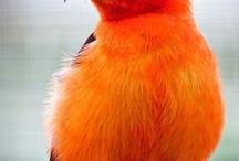 Birds I love / by Doc Hansen