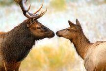"Fotografii ""frumoase din natura"" / Animals"