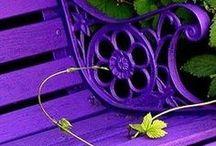 in the garden... / by Terri Fonville