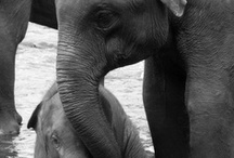 I Love Animals More Than People! / by Leigh Anne