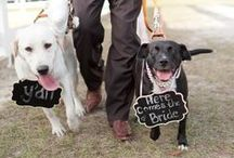 Dogs in Weddings / Dogs are getting their share of the attention in weddings. Get ideas on how to incorporate them in the weddings you plan.