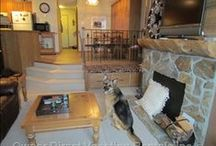 Pet Friendly Vacation Homes / It used to be very difficult to find accommodations that opened their doors to welcome the furry member of ones family, thankfully not so much anymore! Many vacation home owners have dogs of their own or have simply realized it is great way to attract a wider range of guests who literally set their vacation getaways around their pet(s). / by Owner Direct Vacation Rentals