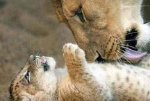 Beautiful Cats / by LAM 101209