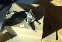 Bunny's big adventure / a kitty from the streets of Cihangir moves from Istanbul to San Francisco