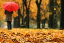Fall season:: / by Loubna B