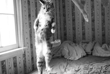meow, miau  / by nextetch