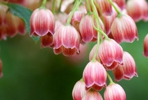 Flora / flowers I love / by Julie Pishny