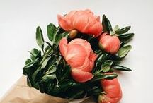 fleurs / by Nina Houghton