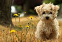 Woofs & Purrrrs / Puppies, kittens, and other adorable animals  / by Salonee Pareek