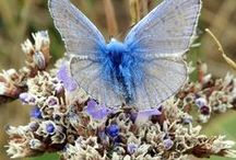 FLYING BEAUTY / Butterflies and Moths / by Barbara Paradis