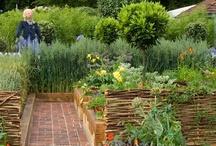 GARDEN - The Kitchen Garden / by Deborah