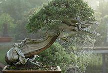 Bonsai / Examples of bonsai design.