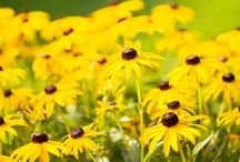 My Garden Notebook / Tips on growing a beautiful garden / by Deborah