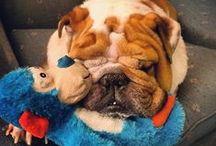 I Want a Bulldog! / by Hannah Leckie