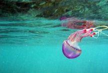 Ocean Life / by Hannah Leckie