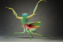 entomology department / I love bugs and insects!