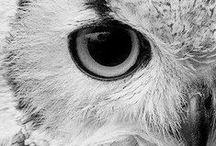owl love / by Megan O'Polka