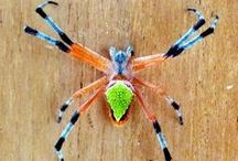 """grady and his lady / """"Whose hope shall be cut off, and whose trust shall be a spider's web."""" (Job 8:14)"""