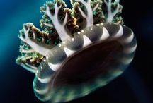 finicky sea creatures