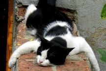 """cats sleep anywhere / """"No matter how much cats fight, there always seem to be plenty of kittens.""""------Abraham Lincoln"""