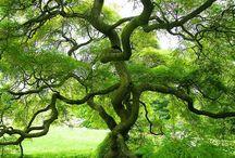 TREE-MENDOUS ! / Pictures of every kind of tree / by Debbie McCravy