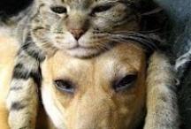 Animals I love / by Kathleen Smith