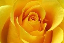 Mellow Yellow / by Lynette Horne-Campbell