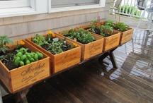 Garden Ideas... / by Melissa Boyd